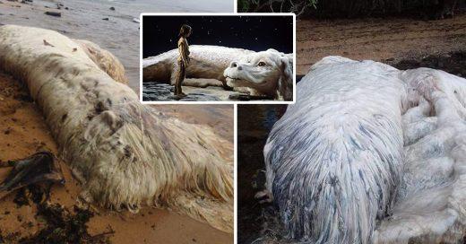 Apareció extraña criatura en las costas de Filipinas