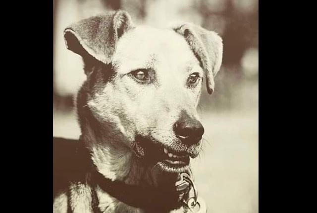 Невыдуманная история Трезора, пса, спасшего в блокаду от голода 16 человек