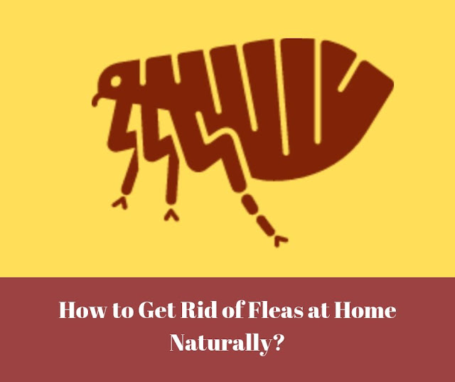 How to get rid of fleas in house naturally