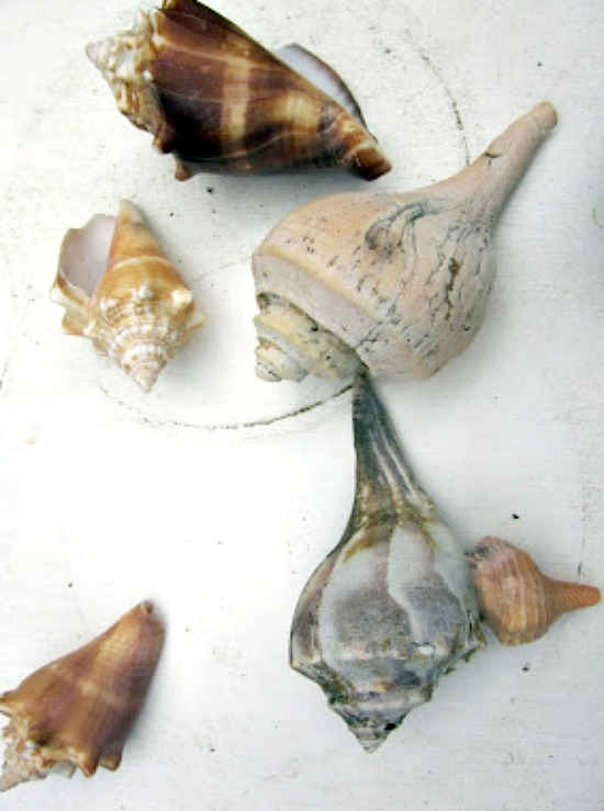 shells with a shiny spray paint
