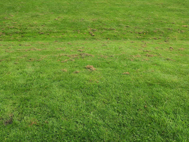 Cut grass on slope. 4th August 2020.
