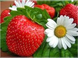 Η φράουλα στην ζωή μας!!!