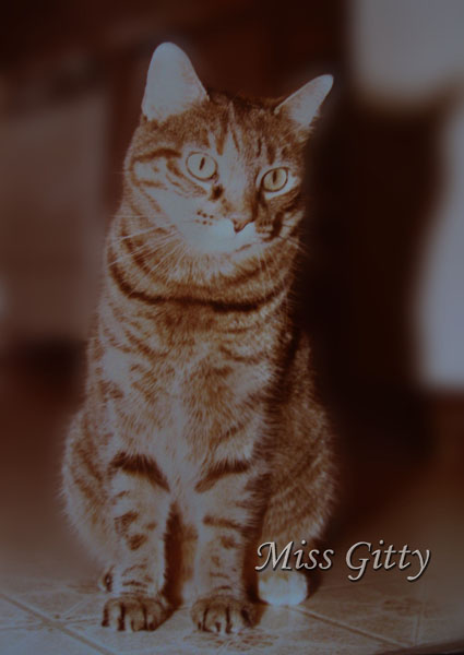 Miss Gitty was an incredible cat.