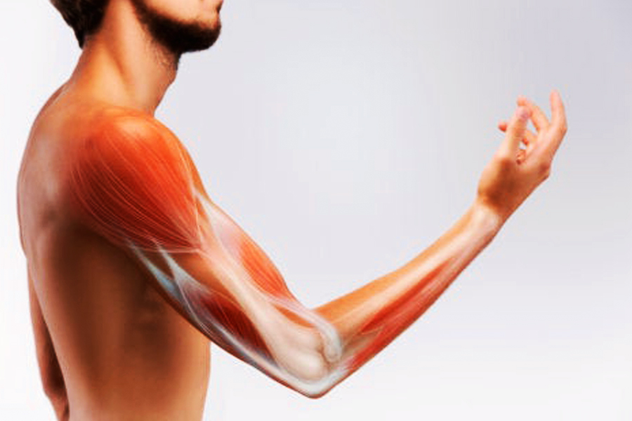what food is good for tendons and ligaments?