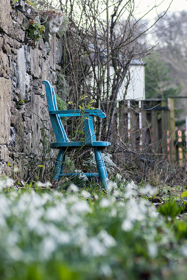 sitting on a carpet of snowdrops