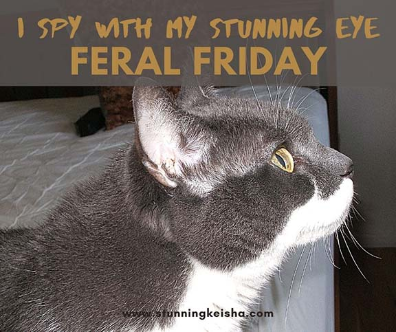 Feral Friday: I Spy With My Stunning Eye