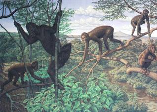 la diatriba del ramapiteco, l'impostore nell'albero genealogico umano