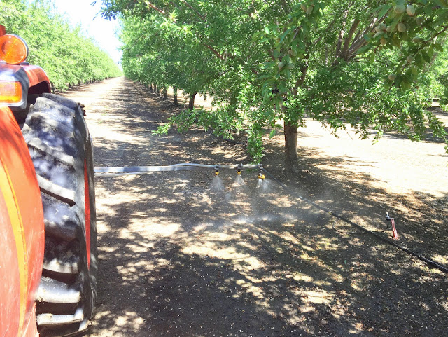 almond fertilizer application