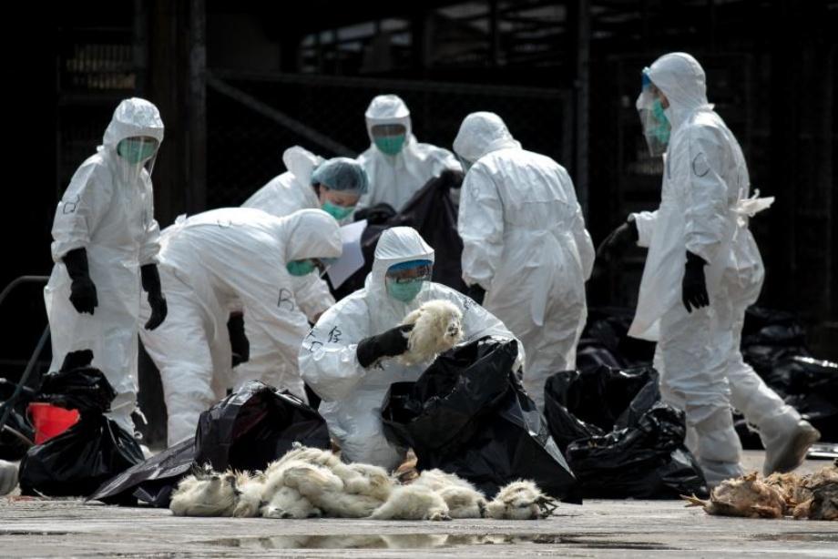 H5N6, Bird Flu, China