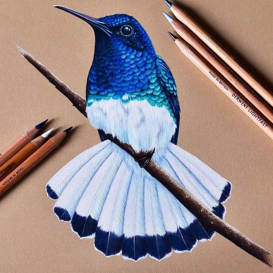 10-Blue-and-white-Hummingbird-Sallyann-www-designstack-co