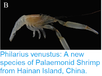 https://sciencythoughts.blogspot.com/2016/09/philarius-venustus-new-species-of.html