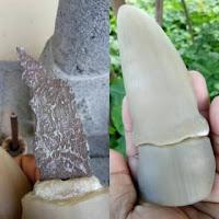 Pusaka Semar Batu Antik Bertuah