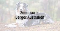 Zoom sur le Berger Australien