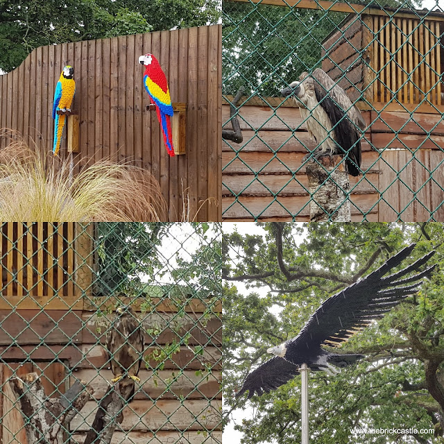 Knowsley Safari #Ultimatebricksafari birds of prey vulture eagle parrot