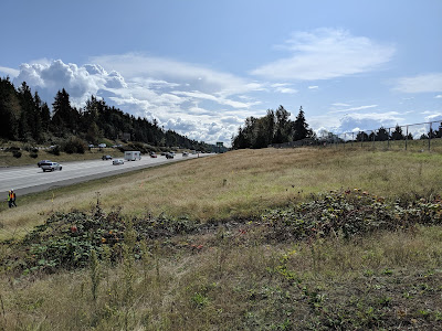Grassy land slopes from right to left toward a freeway on the left. Trees and a blue sky with a few clouds are in the background