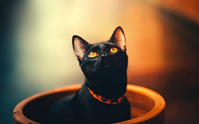 Black Cat in Plant Bowl Wallpaper   Free Download