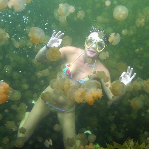 Tinuku Travel Kakaban lake, lagoon ancient isolated 2 million years ago in Derawan created four unique jellyfish species