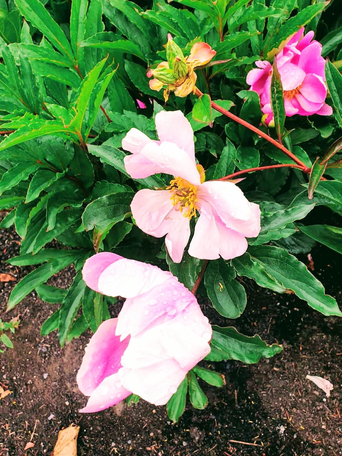 Rained On Flowers