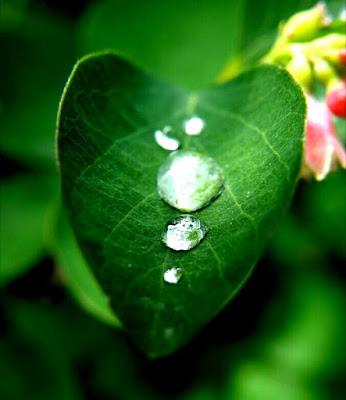 Cara Bersihkan Hati Dari Hasad Dan Dengki