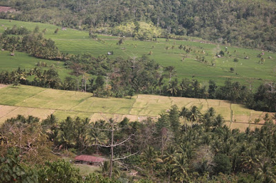 akses jalan menuju hutan lindung lambusango