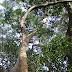 Plantes - Celastrales à Dipsacales