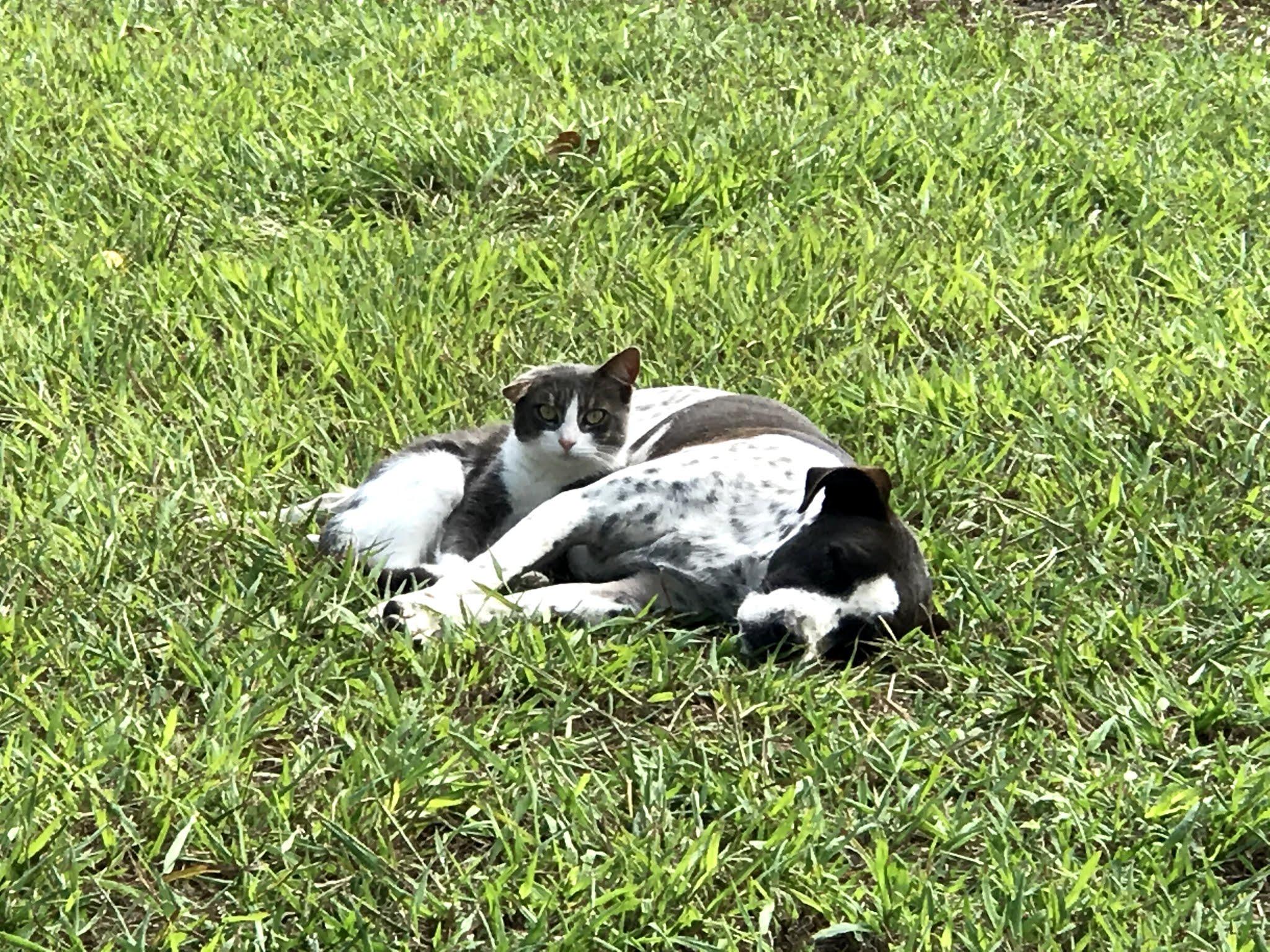 Χαλκίδα νέα: Σκύλος και γάτα αγκαλιασμένοι