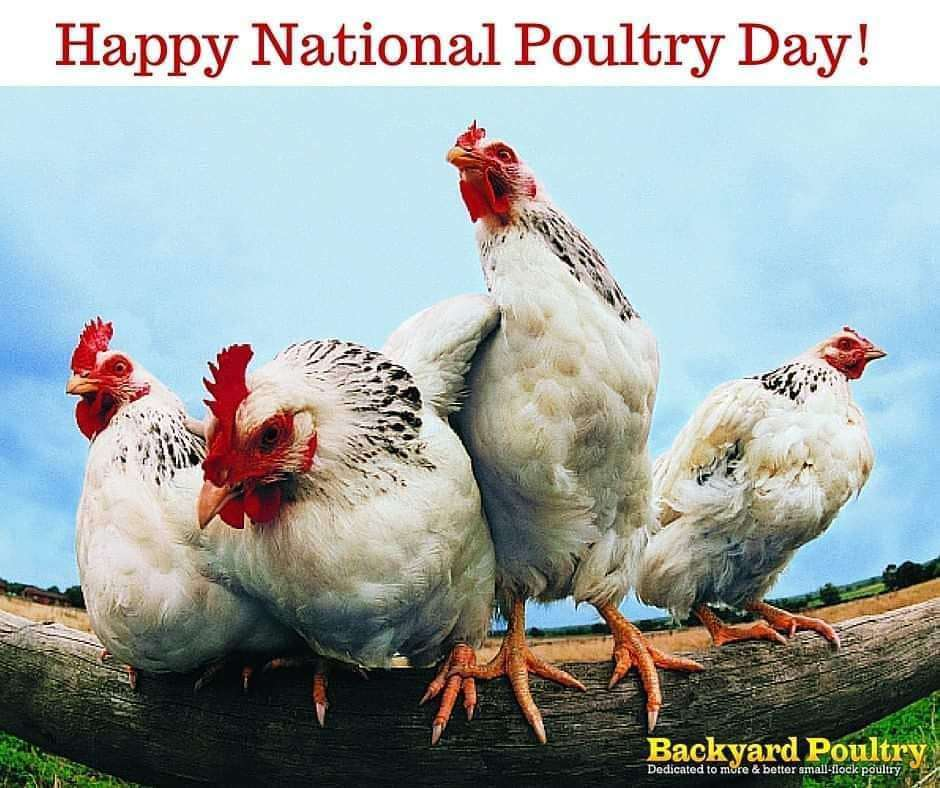 National Poultry Day Wishes pics free download