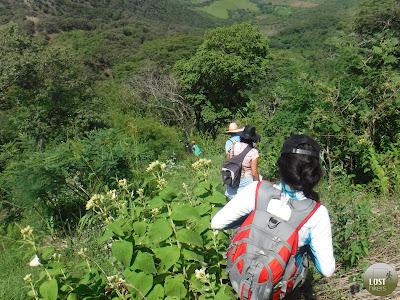 Bosque subcaducifolio en el Cerro los Bailadores