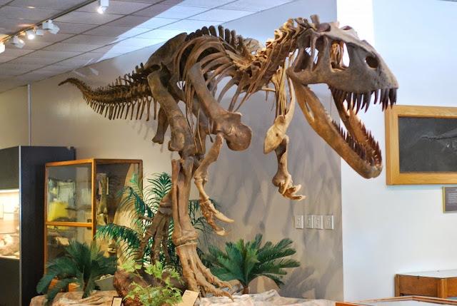 fossil-torvosaurus-dinossauro