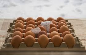 egg, egg benefits, boiled eggs, quail eggs, egg white, eggshell, egg shell, raw egg, boiled egg benefits, egg white benefits, egg yolk benefits,
