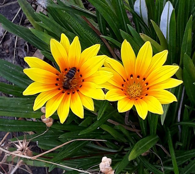 dia mundial das abelhas - a Bella e o Mundo blog