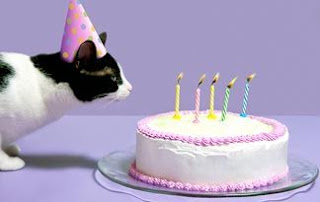 Happy cat with birthday cake