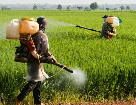 Sprying pesticide