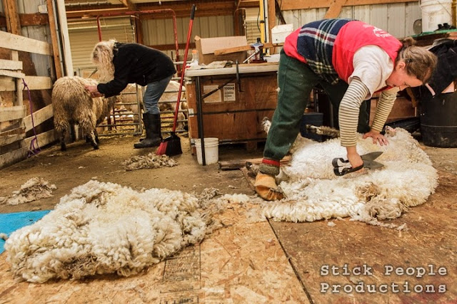 Sheep Shearing - (c) Stick People Productions / Kelly Doering