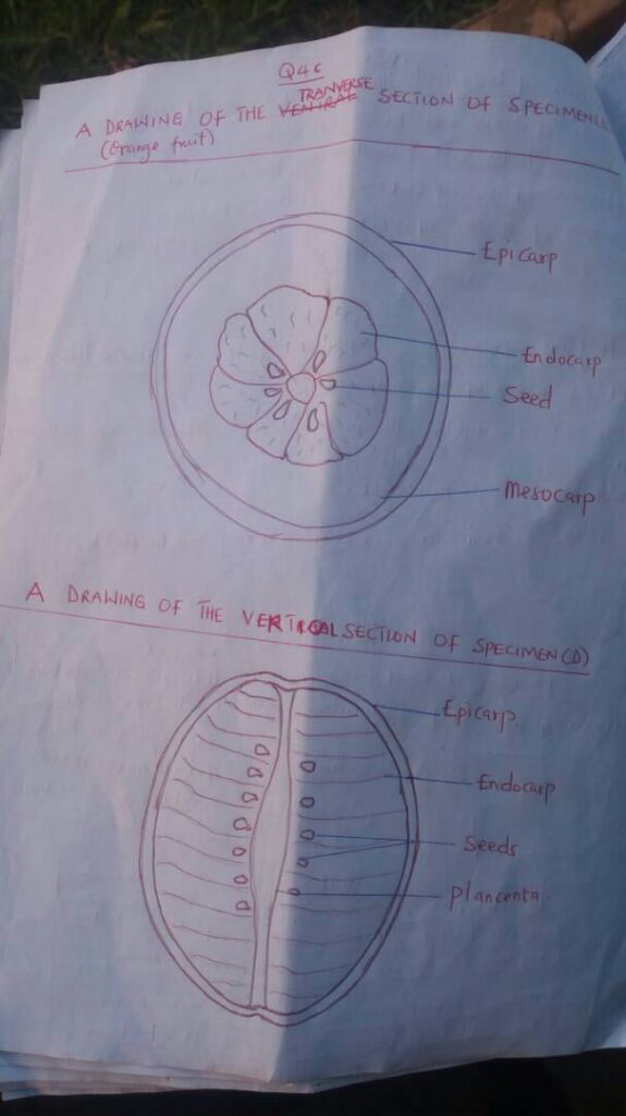 Wassce (Waec) 2018 Biology Questions And Answers For ...