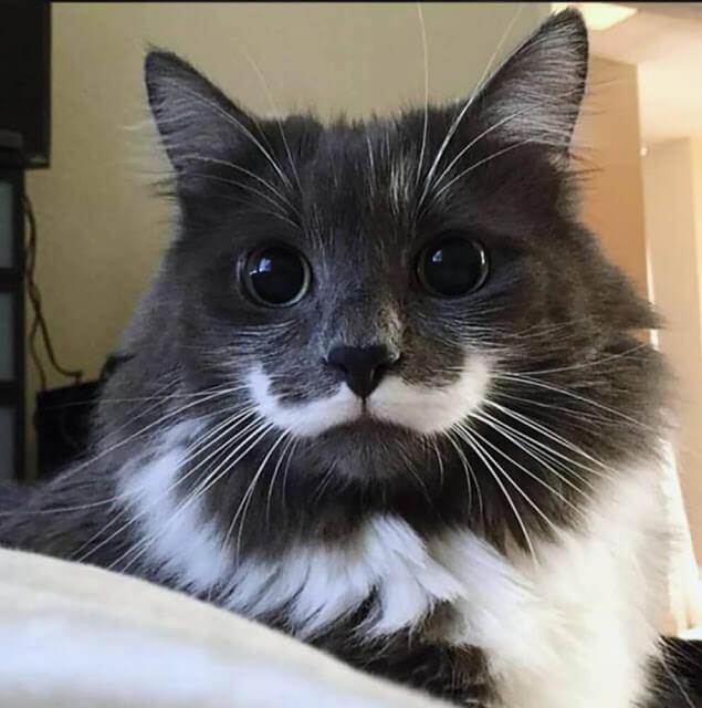 صور قطط,صور عن القطط,قطط مضحكة ,قطط جميلة ,قطط كيوت