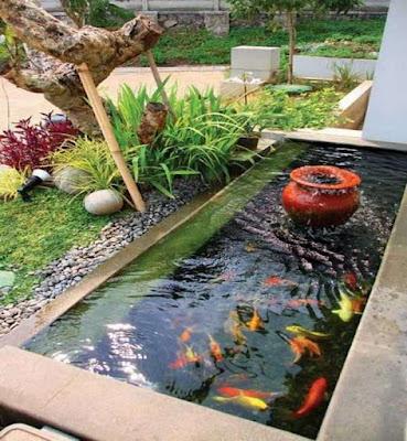 Tukang Kolam Ikan Koi Bintaro