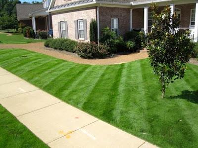 Zeon Zoysia grass Seed, Problems, Reviews, Maintenance