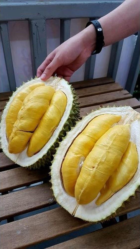 Bibit Tanaman Buah Durian Simas Sibolga