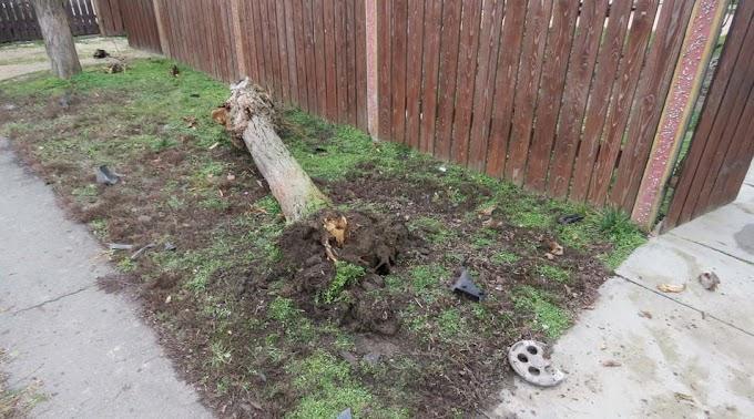 Egy fát kidöntve állt meg a lopott kocsival egy miklósi férfi