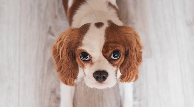 6 Signs of Separation Anxiety in Dogs