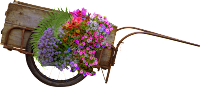 Carroça de flor