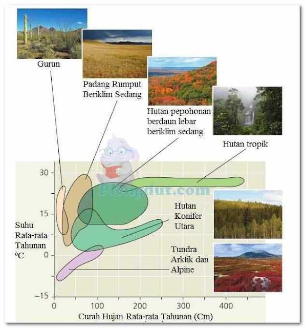Gambar sebuah klimograf untuk beberapa jenis bioma di daerah Amerika Utara. Plot menggambarkan cakupan rentang suhu rata-rata tahunan terhadap curah hujan dalam area bioma tersebut.