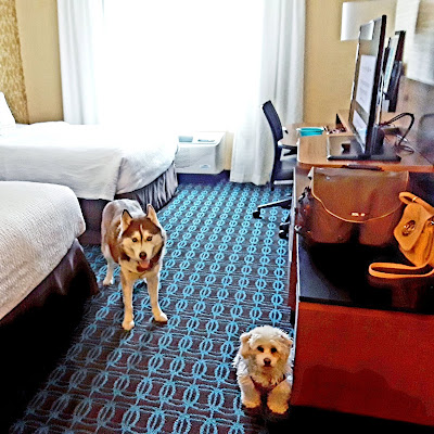 Pet friendly hotel rooms at the Fairfield Inn and Suites in Plymouth, New Hampshire.  Close to Waterville Valley resort. Dog friendly hotels in New Hampshire