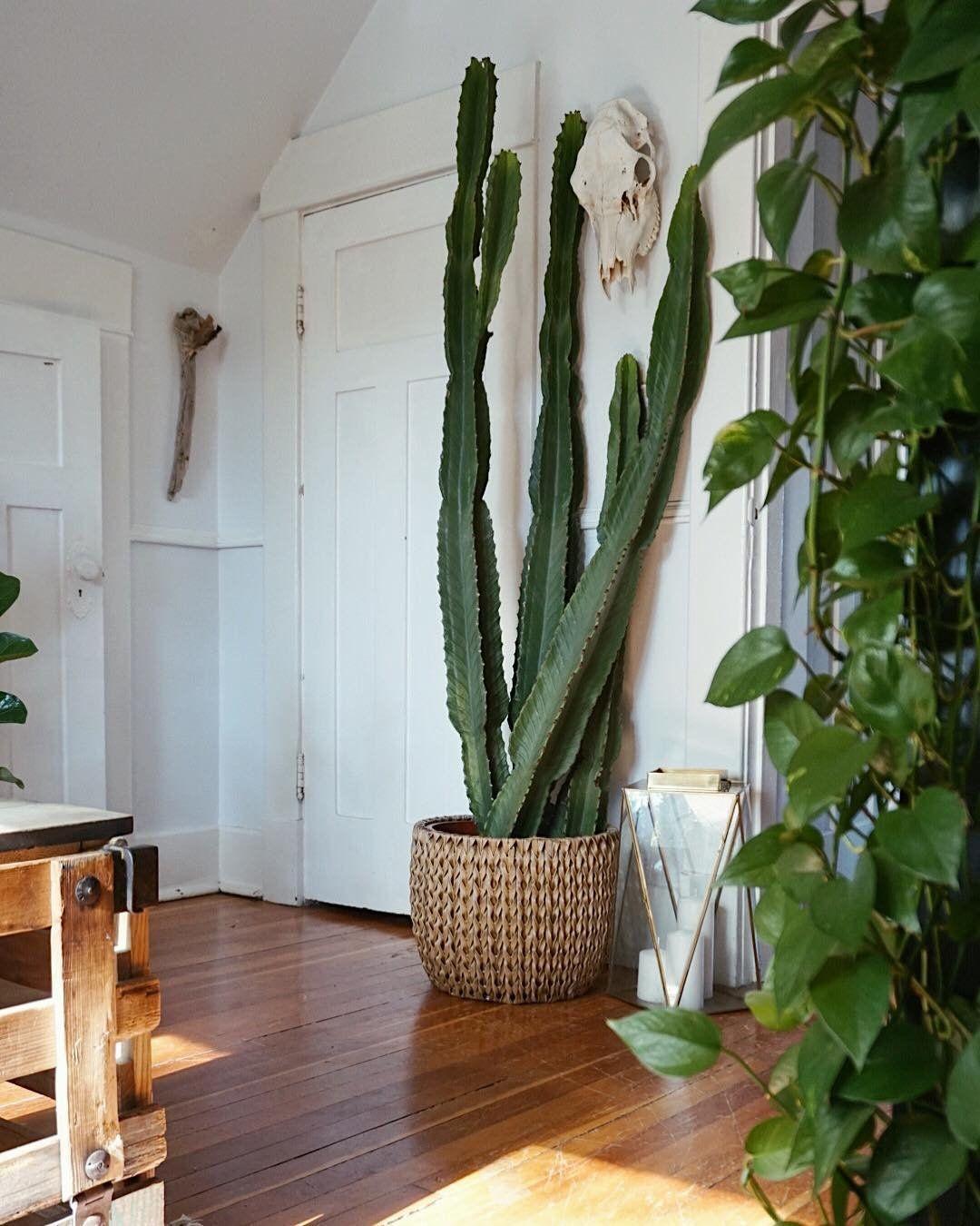 Decorar con cactus, las plantas con superpoderes_21