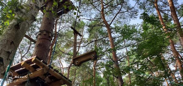 hulajnoga na drzewach