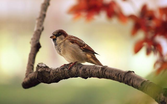 خلفيات طيور مميزة جدا