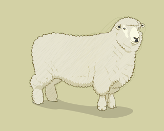 HOW-TO-DRAW-A-SHEEP