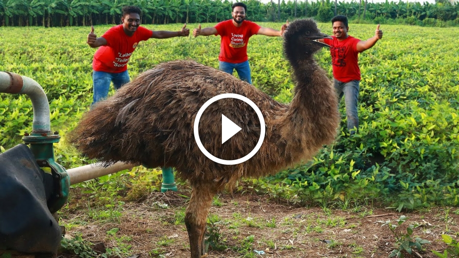 King Emu Bird Biriyani | Emu Special Biryani By Grandpa Kitchen