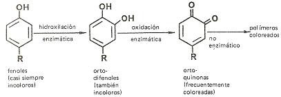 Pardeamiento enzimático Alimenta Acción